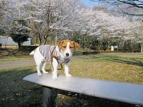 2011長岡公園229