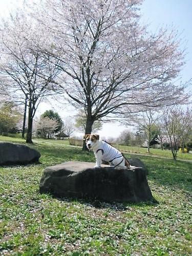2011長岡公園230