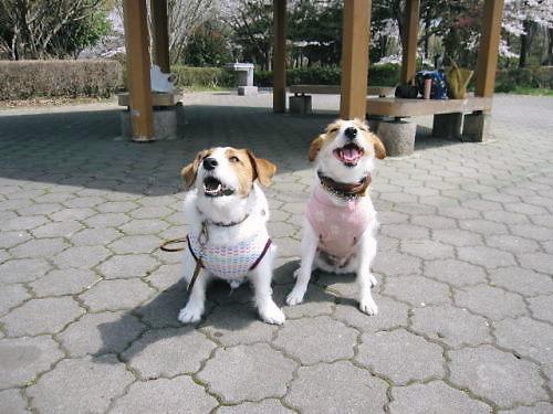 2011長岡公園231