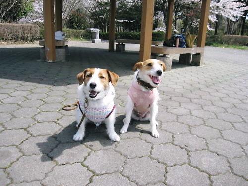 2011長岡公園232