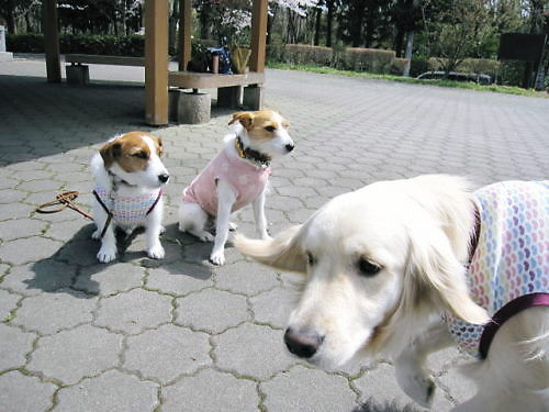 2011長岡公園234