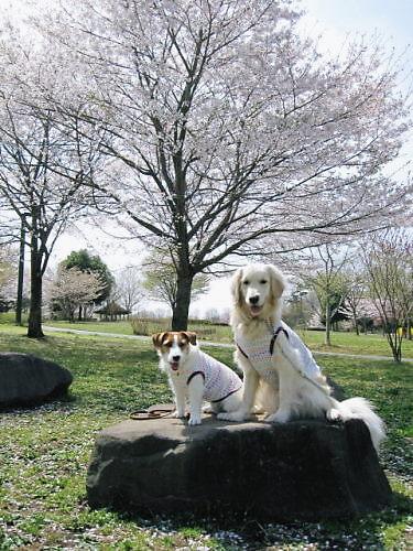 2011長岡公園236