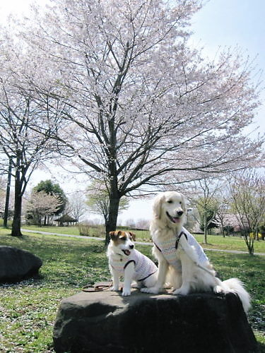 2011長岡公園237