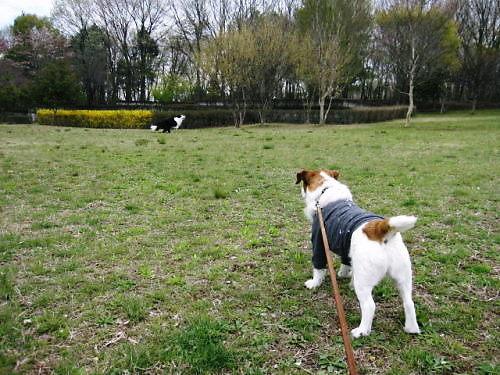 2011長岡公園249