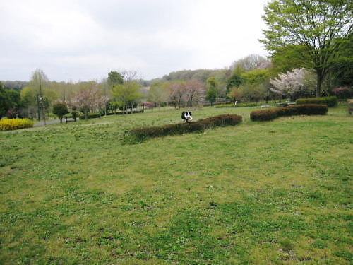 2011長岡公園256