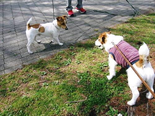 2011長岡公園257