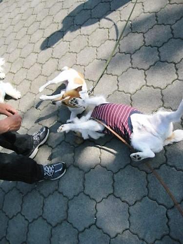 2011長岡公園262