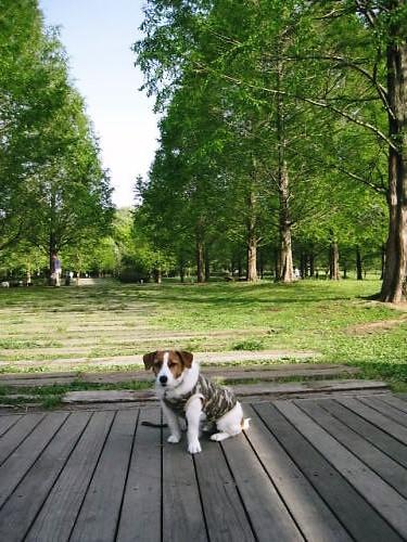 2011長岡公園282
