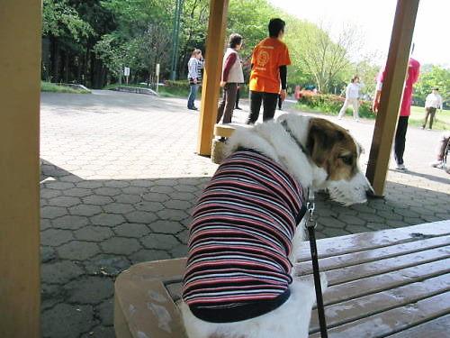 2011長岡公園294