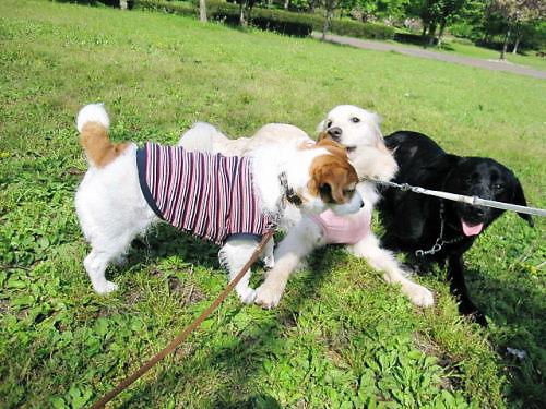 2011長岡公園296