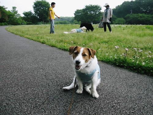 2011長岡公園354