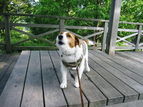 2011長岡公園359