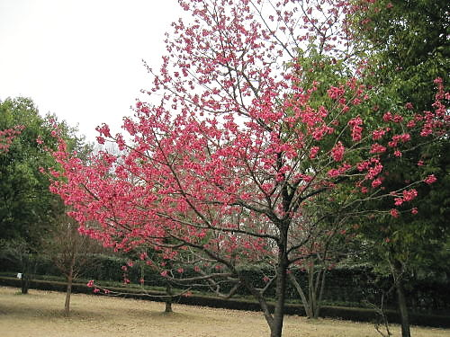 2011草木花015