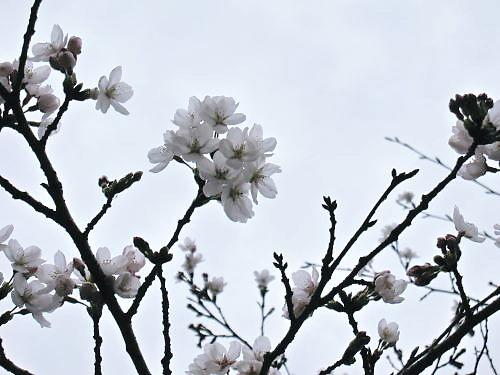 2011草木花016