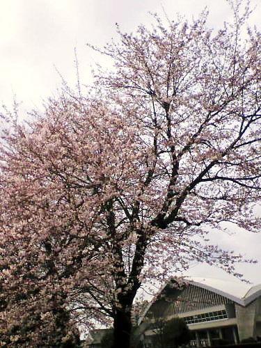 2011草木花017