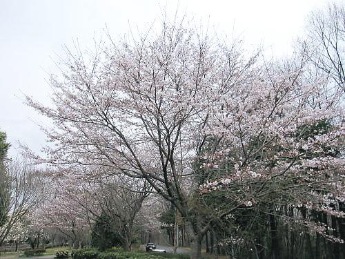 2011草木花018