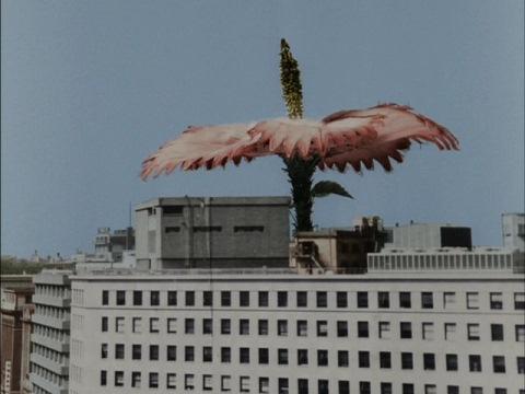 巨大植物 ジュラン
