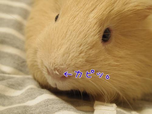お鼻ユニコーン2