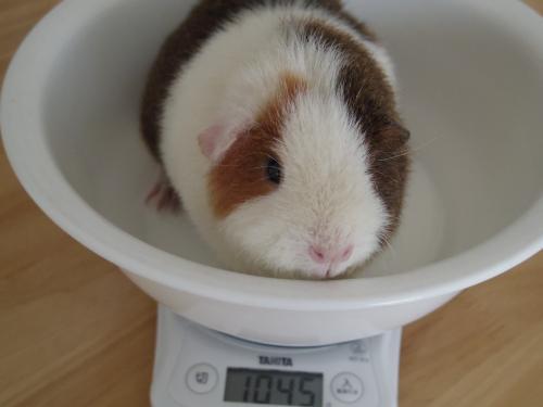 体重測定2014年10月15日2