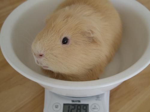 体重測定2014年10月15日3