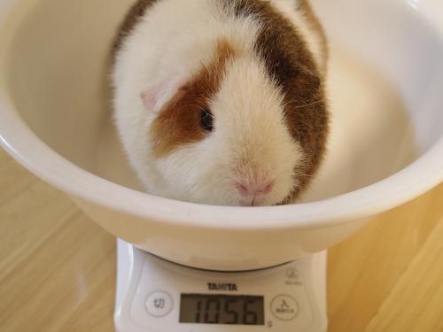 体重測定2014年10月21日1