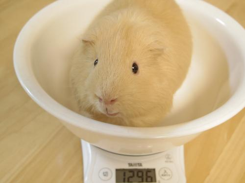 体重測定2014年10月21日3