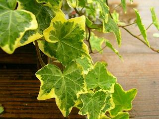植物(写真)045