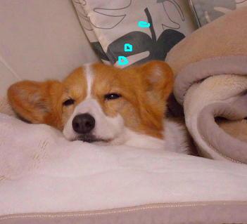 眠ダル花粉症