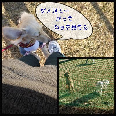 201211230635588c4.jpg