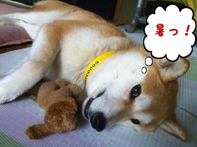 moblog_abe7659d.jpg