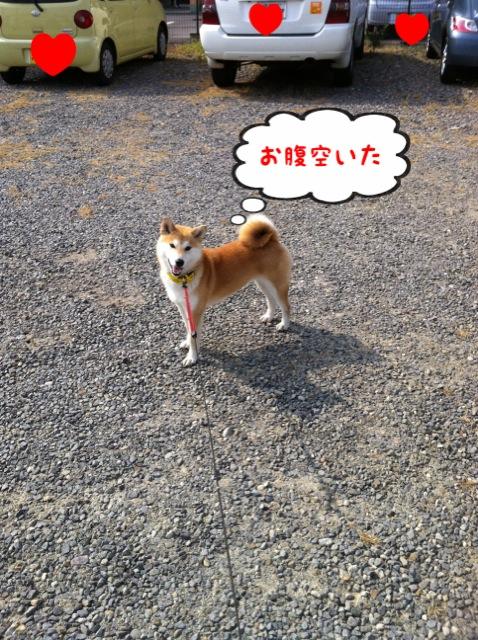 moblog_dfe74e25.jpg