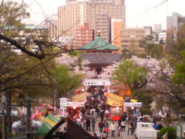 忍池桜と弁天