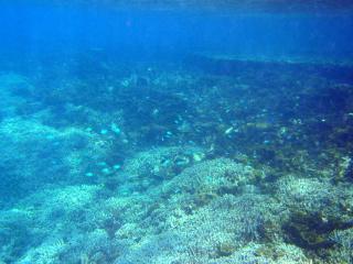 PA300001 2011-10-30 12-31-36