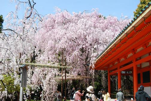 2011.4.17平安神宮