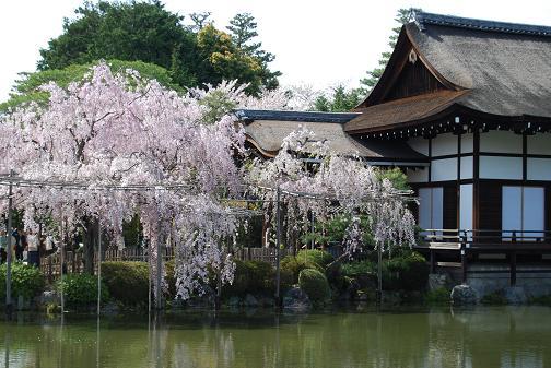2011.4.17平安神宮⑩