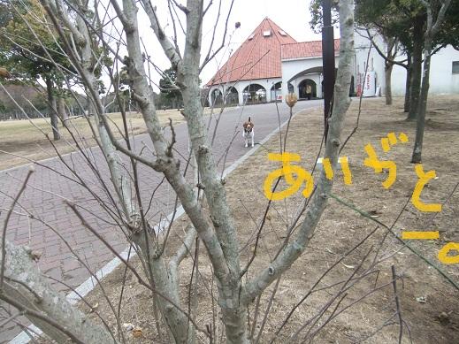 128_20110219003157.jpg