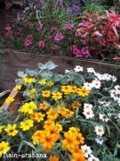 秋らしい花色ですね (^ ^)