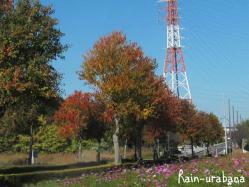 近所の街路樹♪