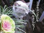 猫草じゃないっつぅ~の!