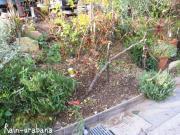 落ち葉を片付けて堆肥を入れよっと♪