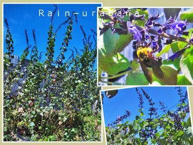 クマ蜂は紫色がお好き♪