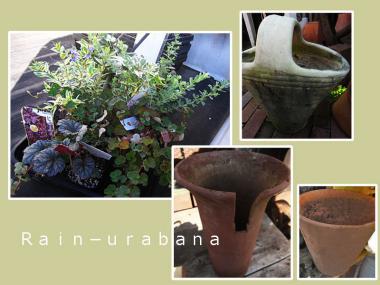 寄せ植え花材&鉢♪