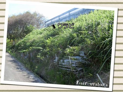 お隣の温室の斜面