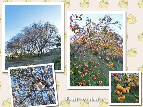 里山の秋①