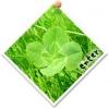 leaf*さんのブログへGO!