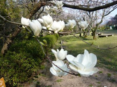 2011雲州窯 012