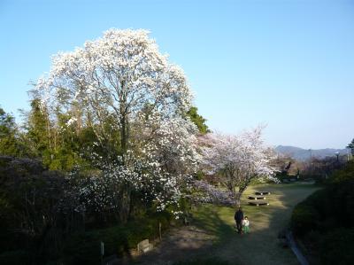 2011雲州窯 059