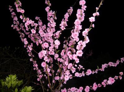 2011雲州窯 095