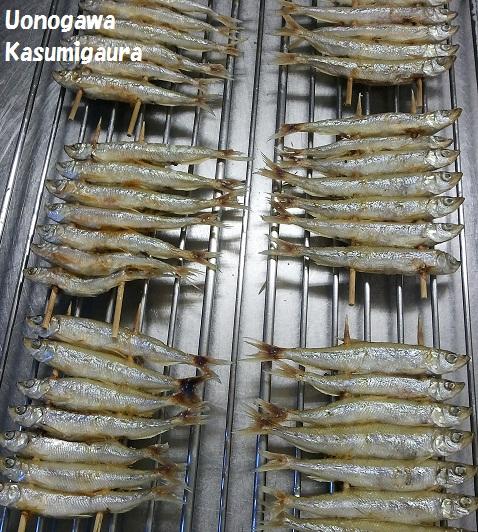 wakasagi1