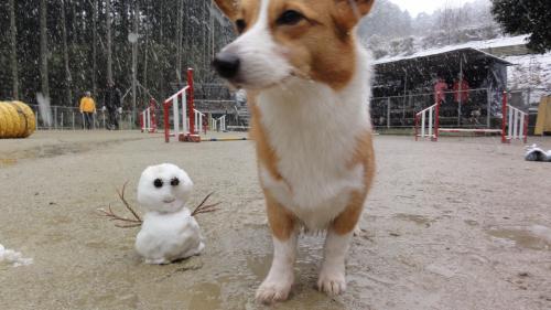 雪だるまとウリ